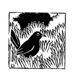 Print linogravure merle noir
